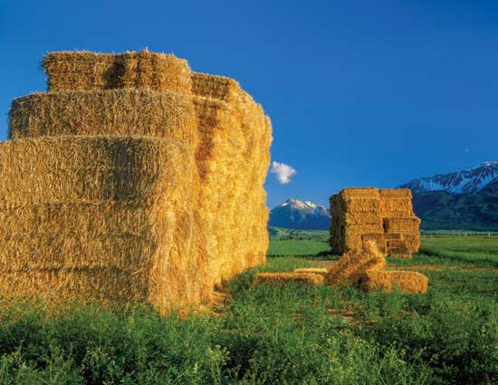 A Guide to Livestock Feed and Forage